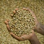 café de comercio justo en grano y verde